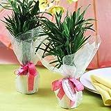Mini Palm Plant-Wedding Favor