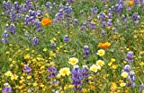 Search : Irish Eyes Garden Seeds- California Wildflower Mix- 1/4lb