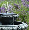 Small Solar Powered Water Feature Victorian Style Fountain Bird Bath with Led Lights PC242