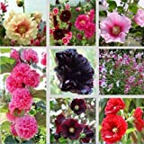 Big Bargain 100 Seeds Mix Alcea Rosea Hollyhock Multi Colors Garden Heirloom Flowers Plants