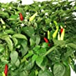 AeroGarden - Thai Pepper Seed Kit - Includes 3 Thai Pepper Seed Pods and 4 Plant Site Spacers - AERO508