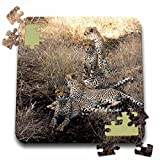 Angelique Cajam Big Cat Safari - South African 4 Cheetahs posing looking in both directions - 10x10 Inch Puzzle (pzl_20108_2)