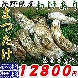訳あり 長野県産採れたて新鮮まつたけ わけあり品(キズ・われなど) 230g入 マツタケ/松茸