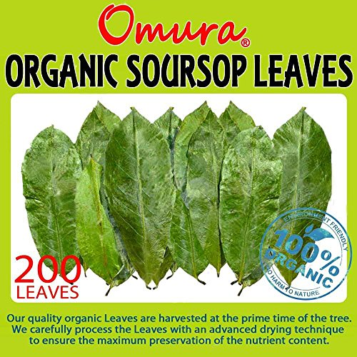 Omura ORGANIC Soursop Guanabana Graviola Guyabano Leaves (200 Leaves) (Graviola Fruit compare prices)
