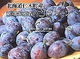 Amazon.co.jp【秋ギフト 北海道フルーツの郷 仁木町から秋の贈り物 生プルーン2Kg】プルーンの中でも甘みが多く人気のサンプルーン。プルーンは栄養価が高く奇跡の果実と言われるほど。瑞々しくほのかな酸味と濃厚な甘みのある今だけの旬のフルーツを、時にはギフトに、時には自分へのご褒美をちょっと贅沢に。
