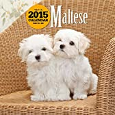 マルチーズ (2015年大判カレンダー) ([カレンダー])