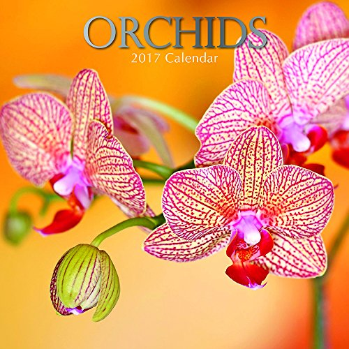 beautiful-floral-photographs-orchids-2017-monthly-wall-calendar-12-x-12