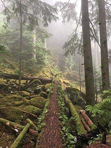Hiking with Valentine - Sea to Summit Trail