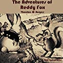 The Adventures of Reddy Fox (       UNABRIDGED) by Thornton W. Burgess Narrated by Tom Weiss