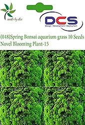 DCS (048) Spring Bonsai aquarium grass 10 Seeds Novel Blooming Plant-15