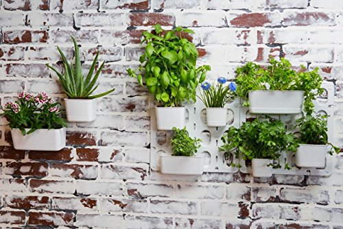 Vertibloom Living Wall Garden Starter Kit   Modular Indoor Vertical Planter  System