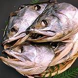 [訳あり] 村上塩引き鮭 頭 [5個]