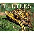 Turtles Calendars