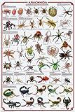 (24x36) Arachnida Spider Educational Science Chart Poster