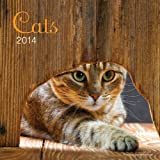 Perfect Timing - Avalanche 2014 Cats Wall Calendar, 12 Month (Jan 2014- Dec 2014), 12 x 24 Inches opened (7001574)
