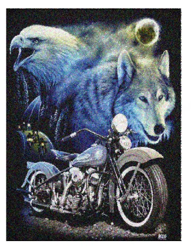 Wild Star 'Born To Be Wild' Fleece Blanket / Throw 120cmx160cm by Wild Star@Home