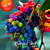 Loss Promotion!100 Seeds/Pack Imported Rainbow Grape Seeds Advanced Fruit Seed Natural Growth Grape Delicious...