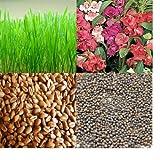 alkarty wheatgraas and balsam seed