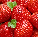 Plump Red Strawberry Seeds by National Gardens