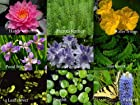 Pond plant selection Nine varieties of aquatic plant for the water garden