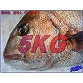 激安、天然真鯛5kg 特大サイズ