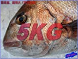 激安、天然真鯛5kg 特大サイズ ランキングお取り寄せ