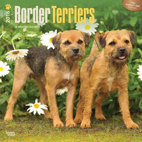 Border Terriers 2016 Square 12x12 (Multilingual Edition) PDF