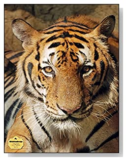 Tiger Face Notebook - The bold look of this tiger makes a dramatic cover for this college ruled notebook.
