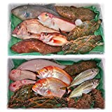 魚水島 「厳選」日本海の鮮魚セット 海におまかせ・大漁箱