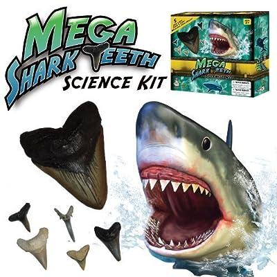 Mega Shark Teeth Science Kit Children, Kids, Game from Avner-Toys