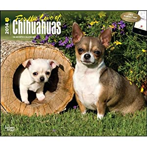 Chihuahuas 2014 Deluxe Wall Calendar