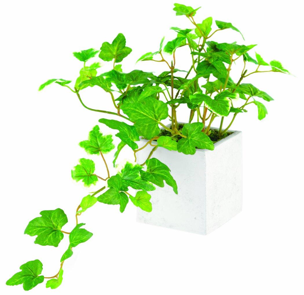 やり 観葉 植物 頻度 水