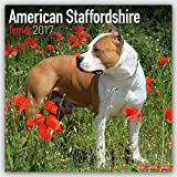 American Staffordshire Terrier Calendar 2017 - Dog Breed Calendars - 2016 - 2017 wall calendars - 16 Month by Avonside