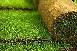 Real Grass Training Sod (4 x 2 Feet)