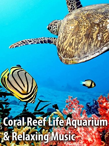 Coral Reef Life Aquarium & Relaxing Music