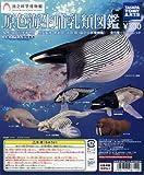 ガチャガチャ ガシャポン 立体カプセル百科事典 原色海生哺乳類図鑑 全7種