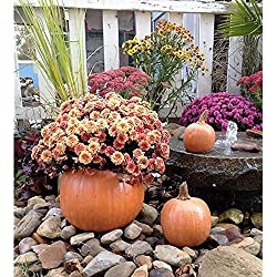 Athena Garden Pumpkin Planter - Set of 3