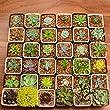 20pcs Gorgeous Different Succulents Plant in 2\