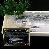 【幻の鮭】鮭児(けいじ)【1尾/証明書・桐箱入】