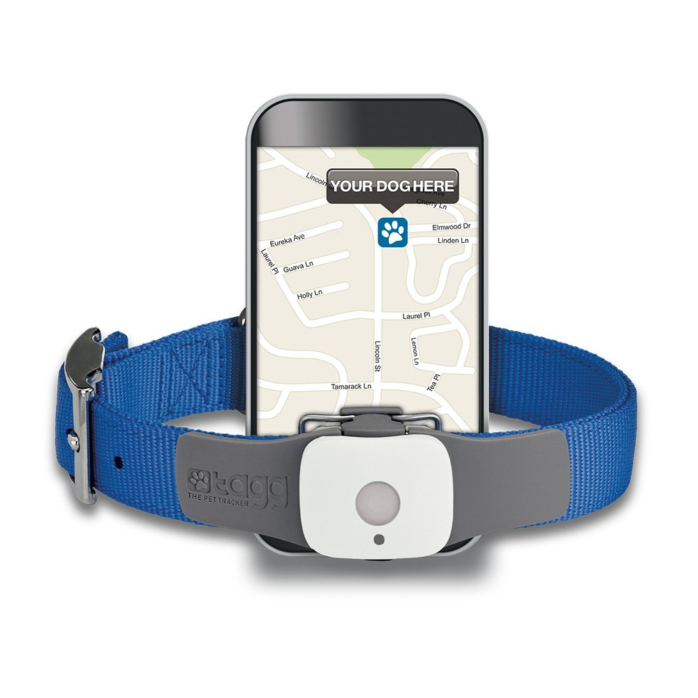 Tagg The Dog Gps Tracking Systems