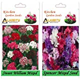 Alkarty Sweet William And Sweet Peas Spencer Mixed Seeds Pack Of 20 (Winter)
