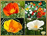 Search : California Dreaming Mixed Poppy Seeds - .3 Oz.- Approximately 5,000 Seeds