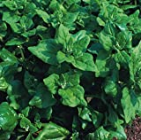 Kings Seeds - Spinach New Zealand - 50 Seeds