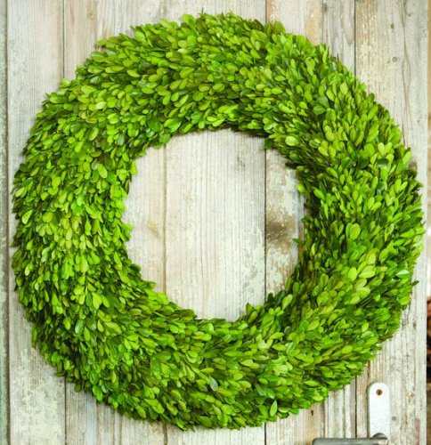 Preserved Boxwood Wreaths, 12