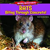 Rats: Biting Through Concrete! (Animal Superpowers)
