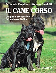 Cane Corsos What s Good About Em What s Bad About Em