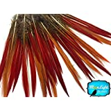 Pheasant Feathers, 10 8-10