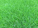 1kg Grass Seed covering 45 sqm, High...