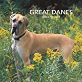img - for Great Danes (International) 2008 Square Wall Calendar (German, French, Spanish and English Edition) book / textbook / text book