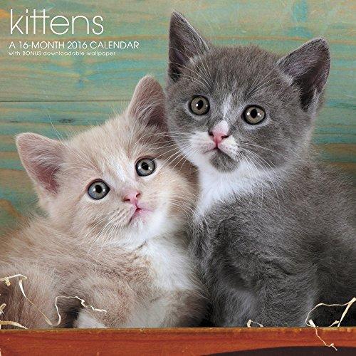 Kittens Wall Calendar (2016)